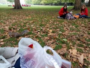Ardillas en Green Park