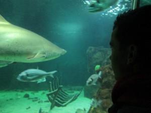 Saul y tiburón