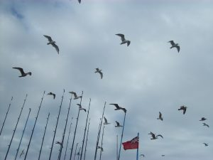 gaviotas-y-canas-de-pescar