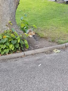 Squirrels in the park!